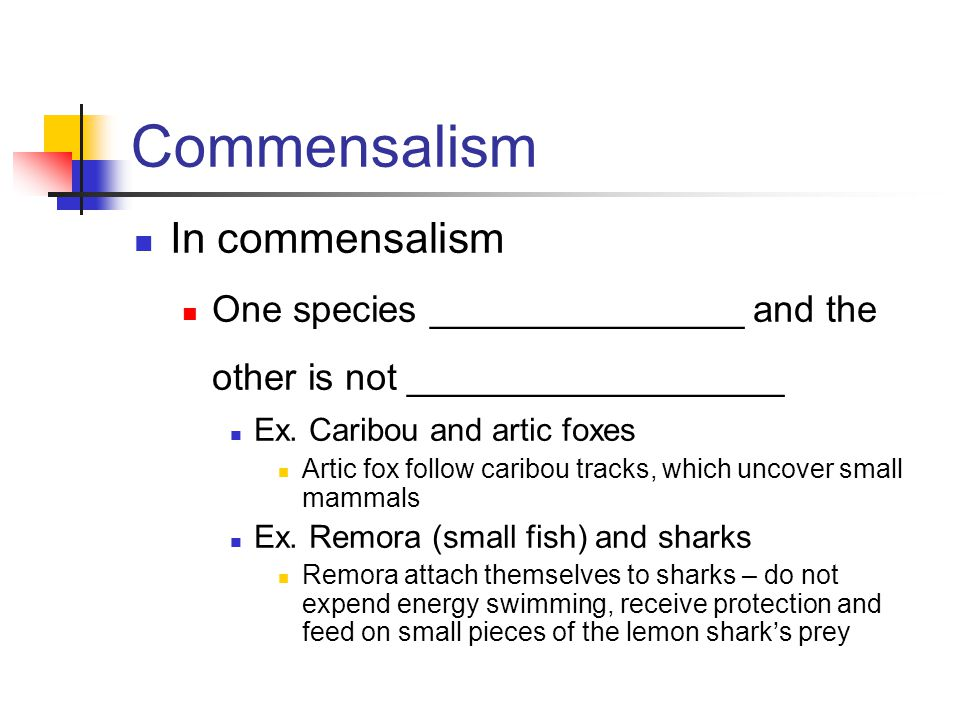 Commensalism In commensalism