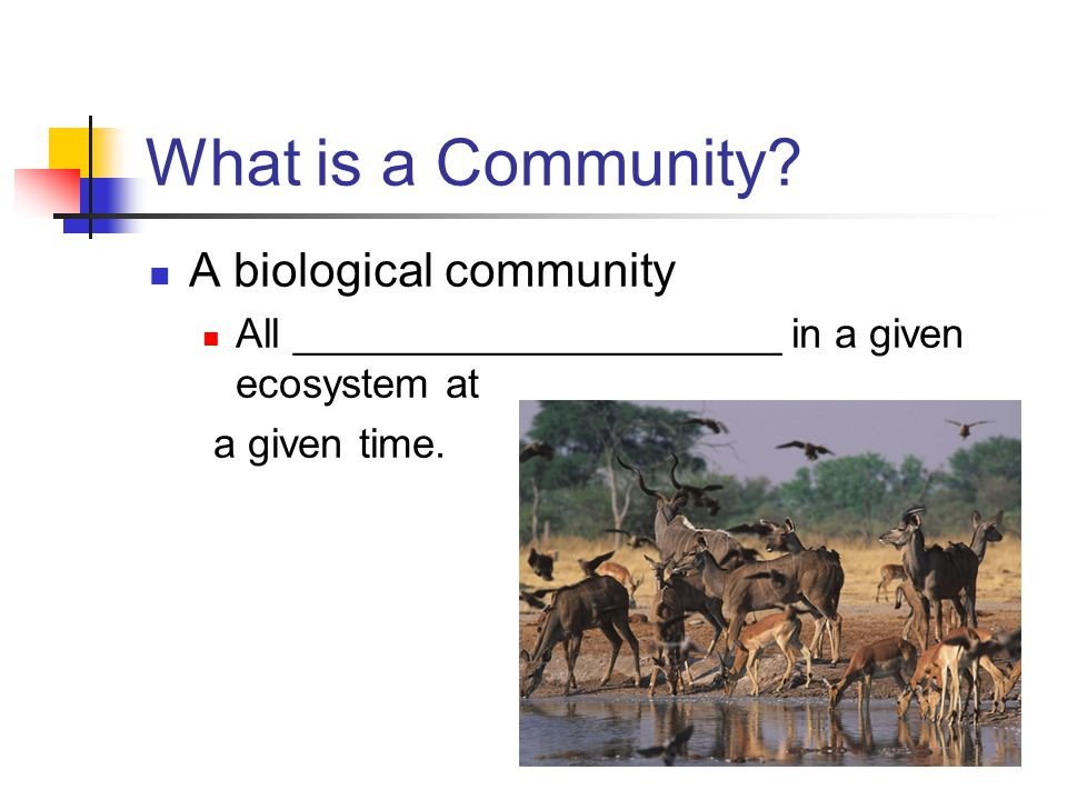 What is a Community A biological community