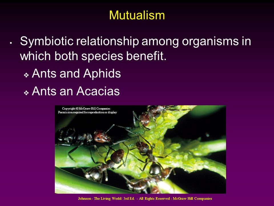 Symbiotic relationship among organisms in which both species benefit.