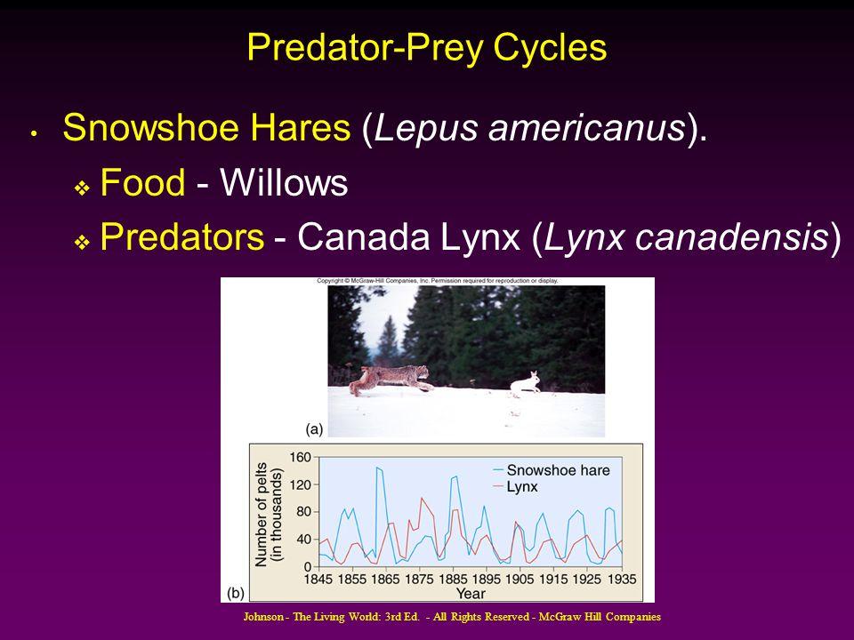 Snowshoe Hares (Lepus americanus). Food - Willows