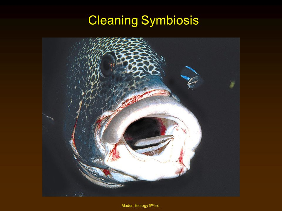 Cleaning Symbiosis Mader: Biology 8th Ed.