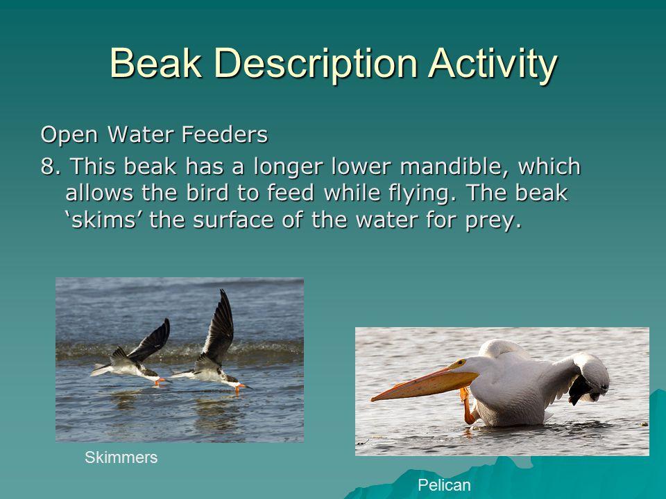 Beak Description Activity