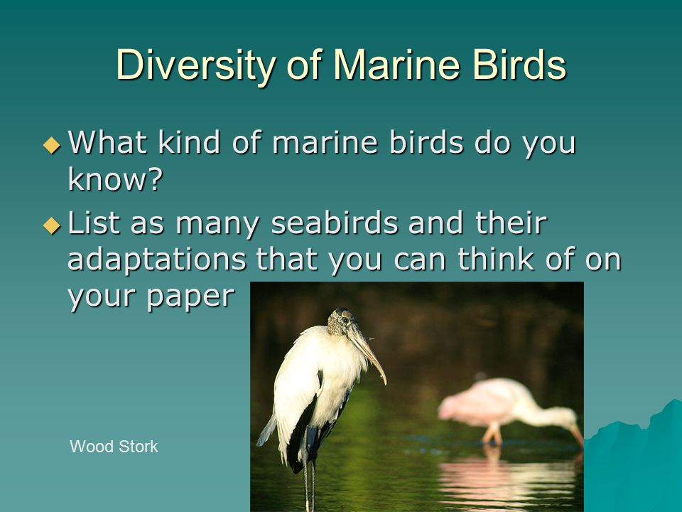 Diversity of Marine Birds