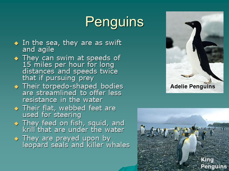 Penguins In the sea, they are as swift and agile