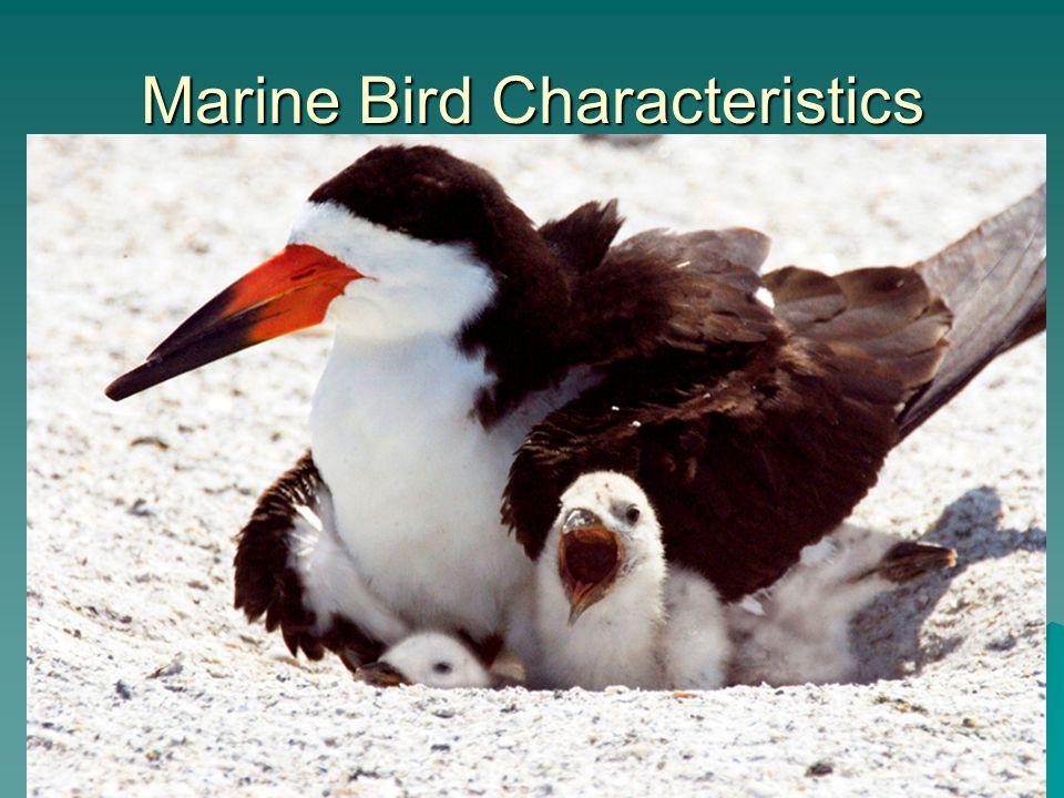 Marine Bird Characteristics