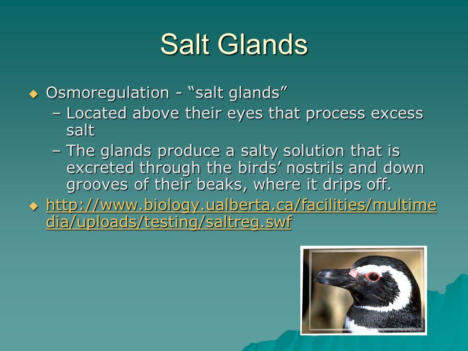 Salt Glands Osmoregulation - salt glands
