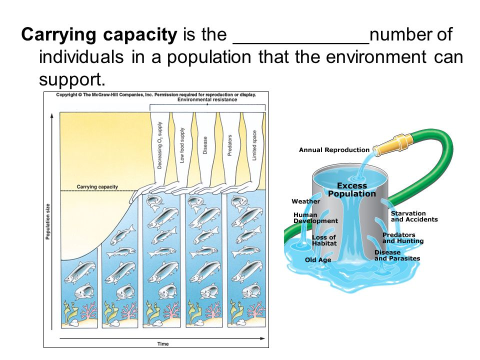 Carrying capacity is the _____________number of individuals in a population that the environment can support.