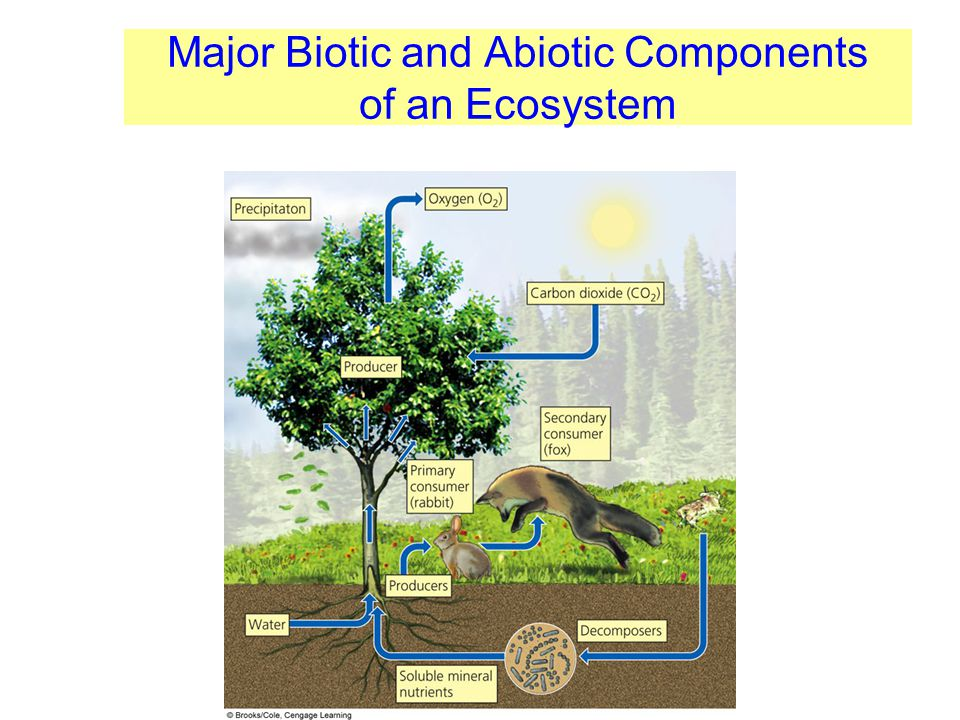 Major Biotic and Abiotic Components of an Ecosystem
