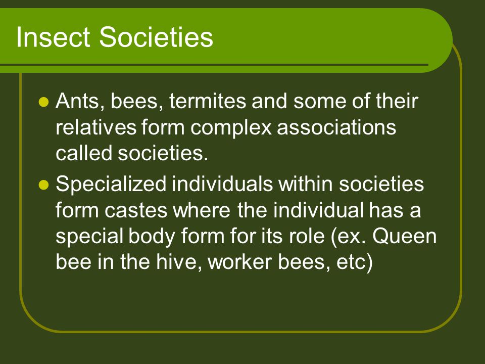 Insect Societies Ants, bees, termites and some of their relatives form complex associations called societies.