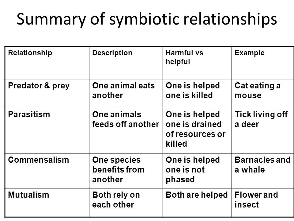 Summary of symbiotic relationships