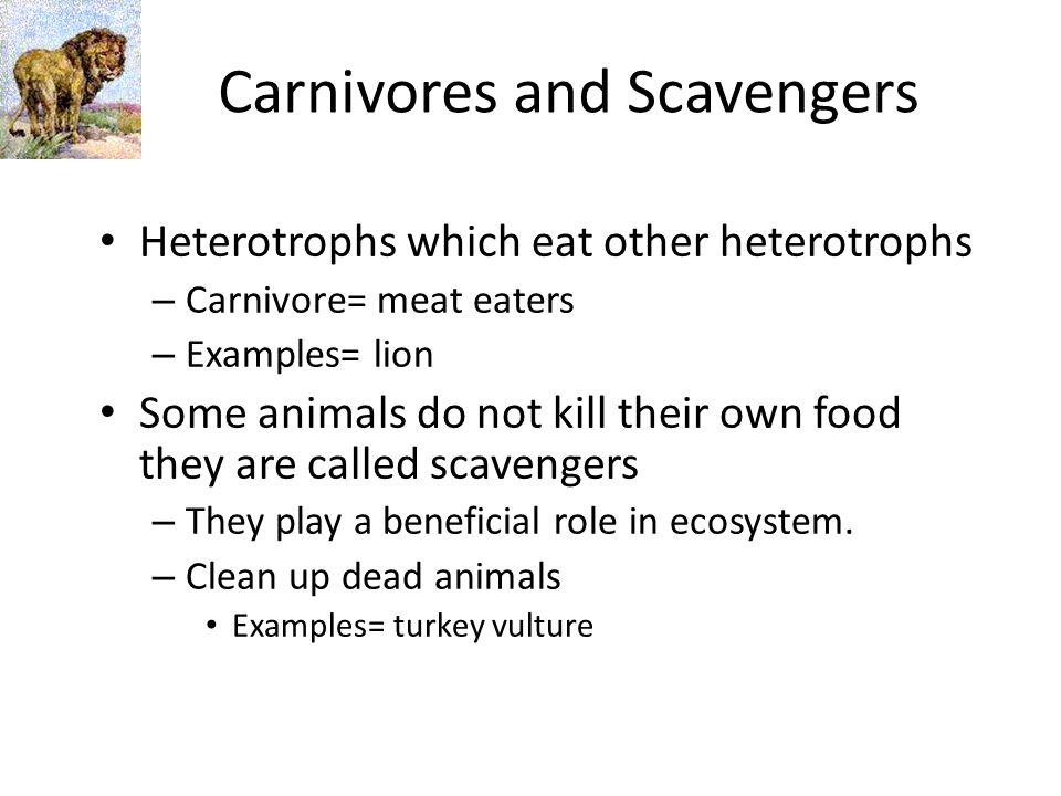 Carnivores and Scavengers