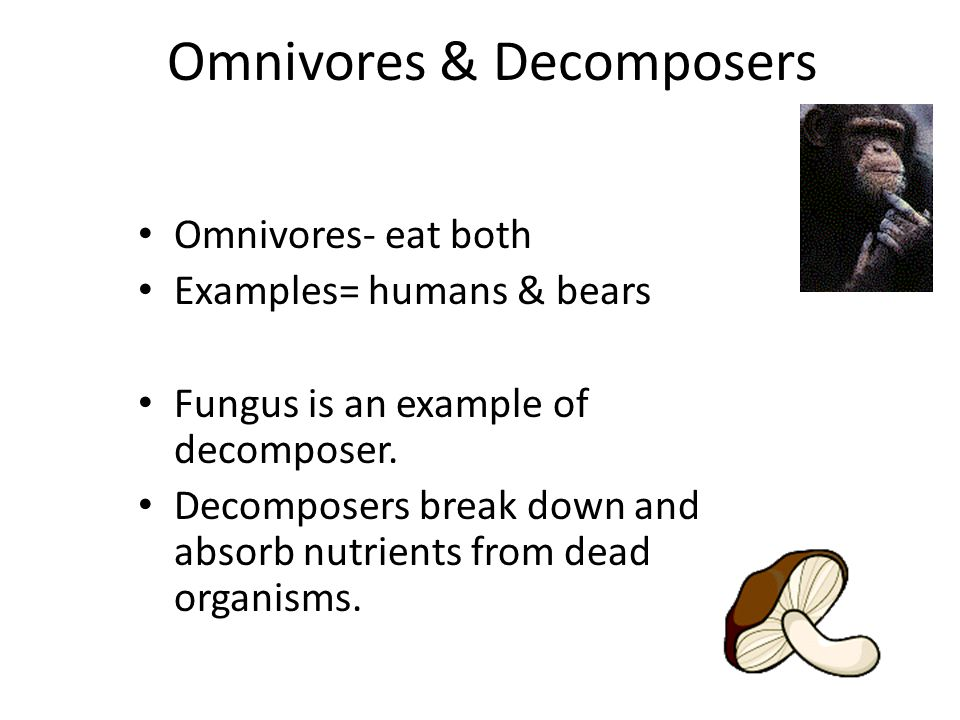 Omnivores & Decomposers