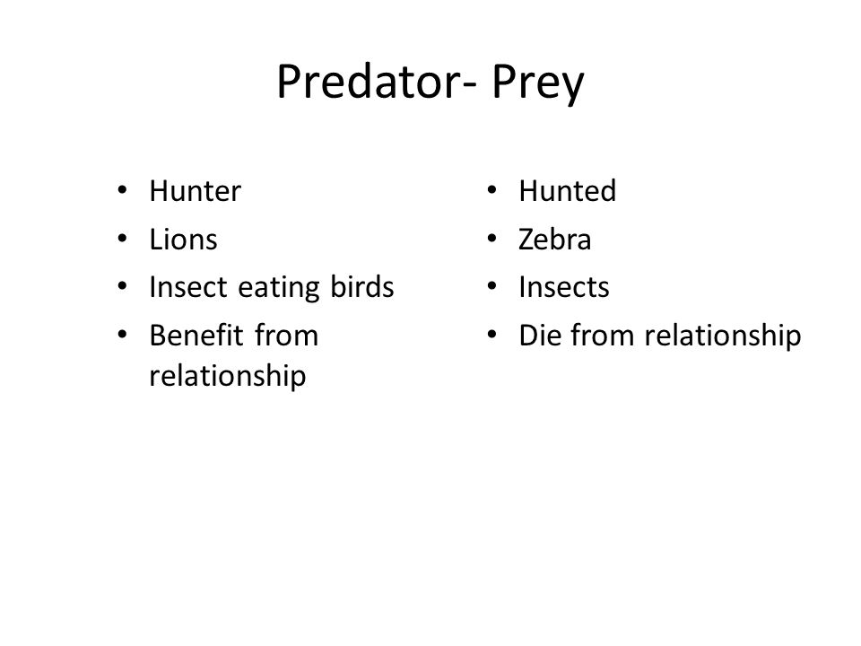 Predator- Prey Hunter Lions Insect eating birds