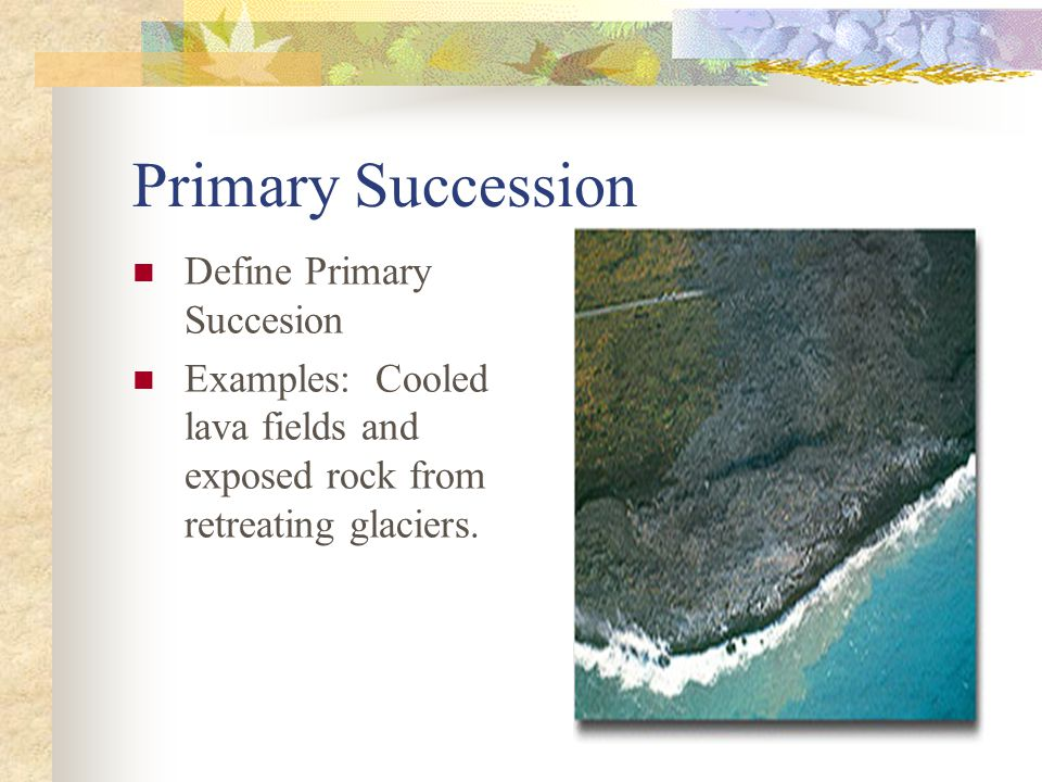 Primary Succession Define Primary Succesion