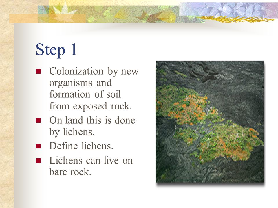Step 1 Colonization by new organisms and formation of soil from exposed rock. On land this is done by lichens.