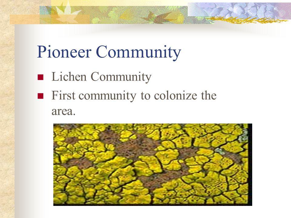 Pioneer Community Lichen Community