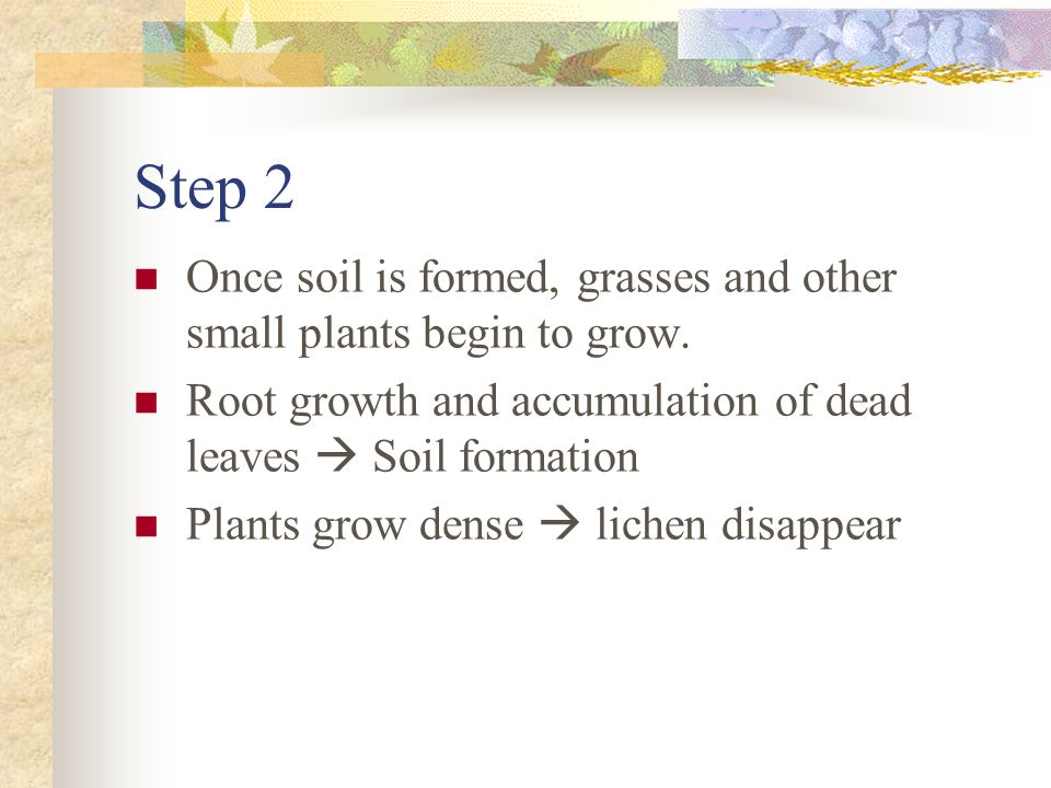 Step 2 Once soil is formed, grasses and other small plants begin to grow. Root growth and accumulation of dead leaves  Soil formation.