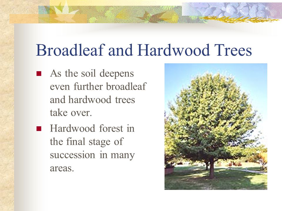 Broadleaf and Hardwood Trees