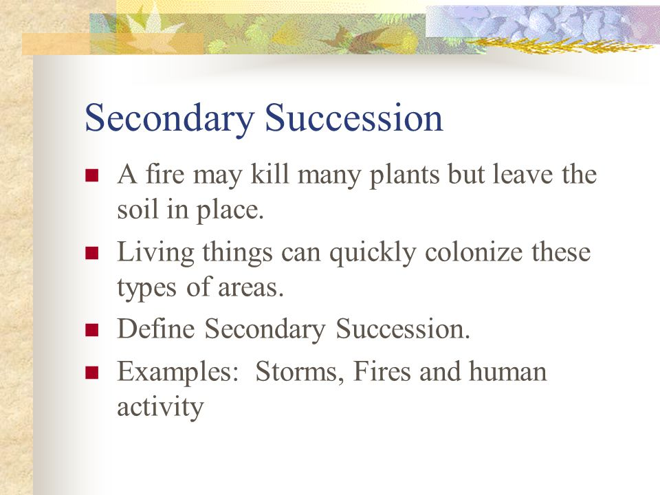 Secondary Succession A fire may kill many plants but leave the soil in place. Living things can quickly colonize these types of areas.