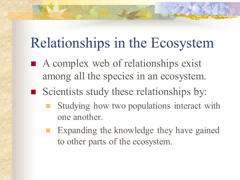 Relationships in the Ecosystem