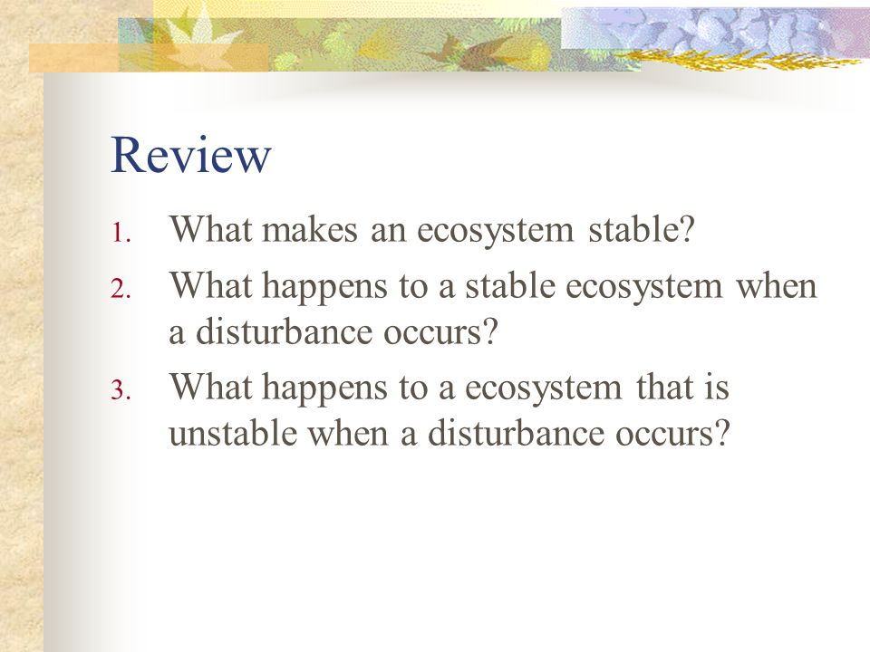 Review What makes an ecosystem stable