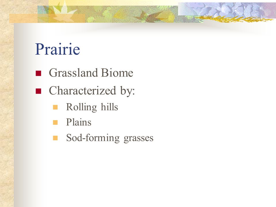 Prairie Grassland Biome Characterized by: Rolling hills Plains