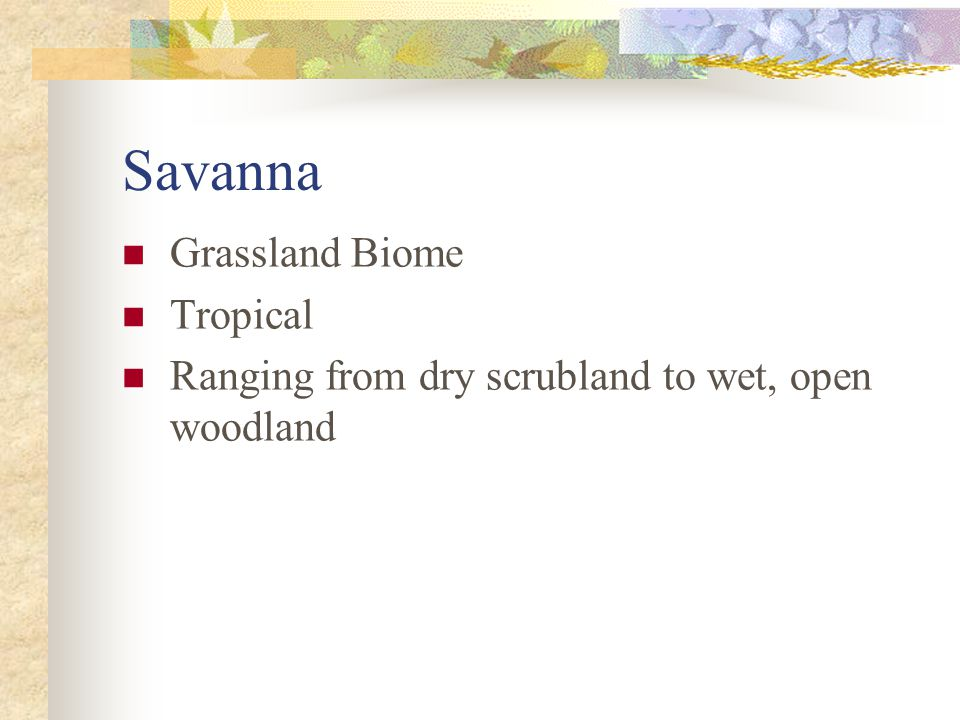 Savanna Grassland Biome Tropical
