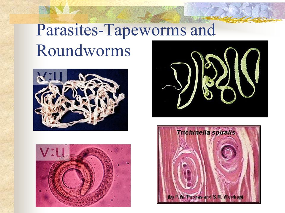Parasites-Tapeworms and Roundworms