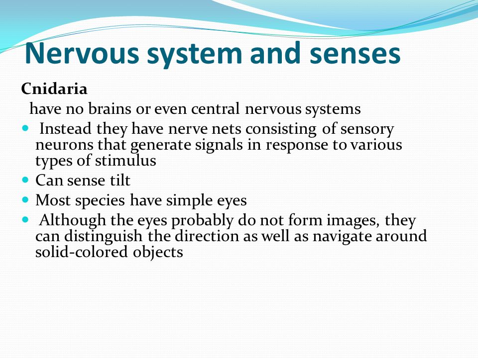 Nervous system and senses