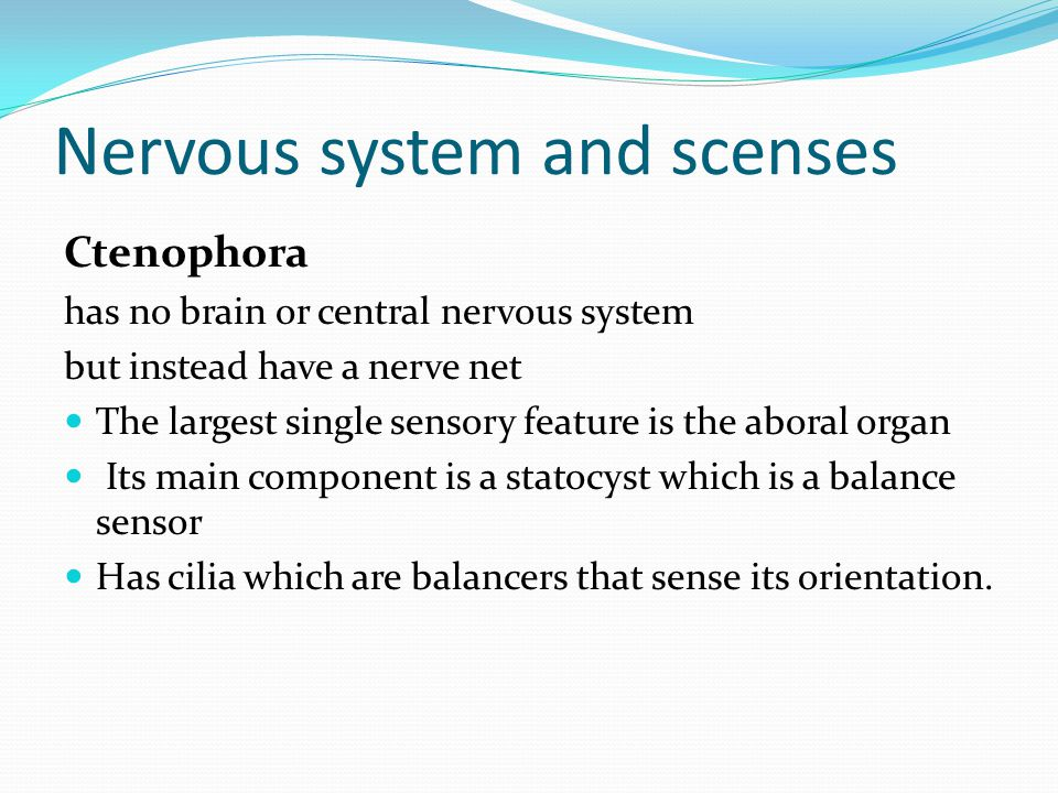 Nervous system and scenses