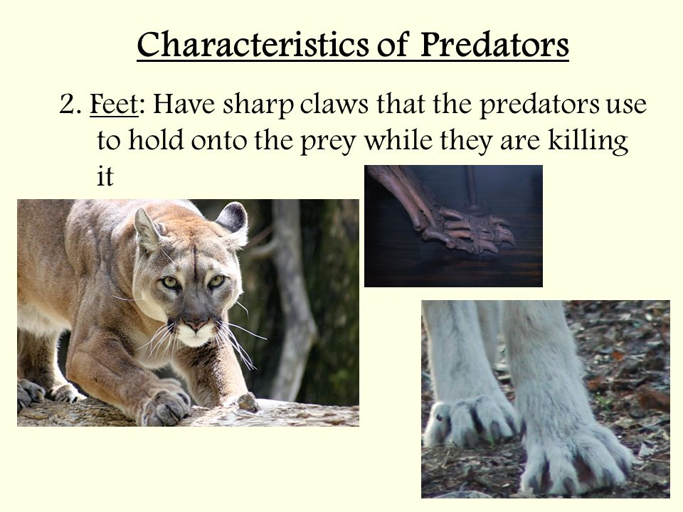 Characteristics of Predators