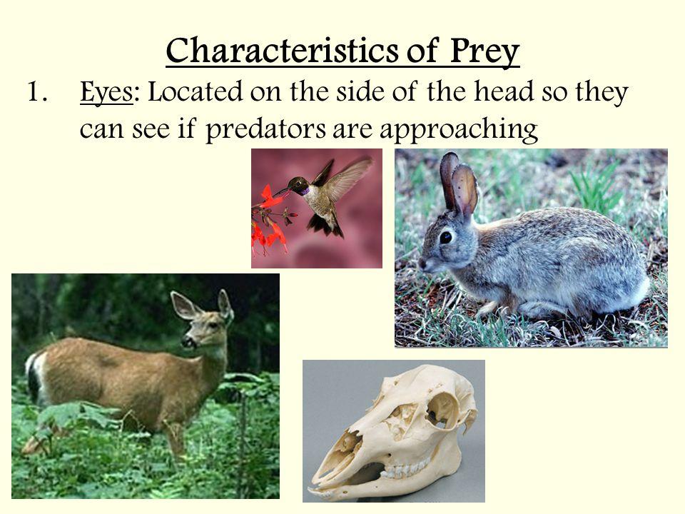 Characteristics of Prey
