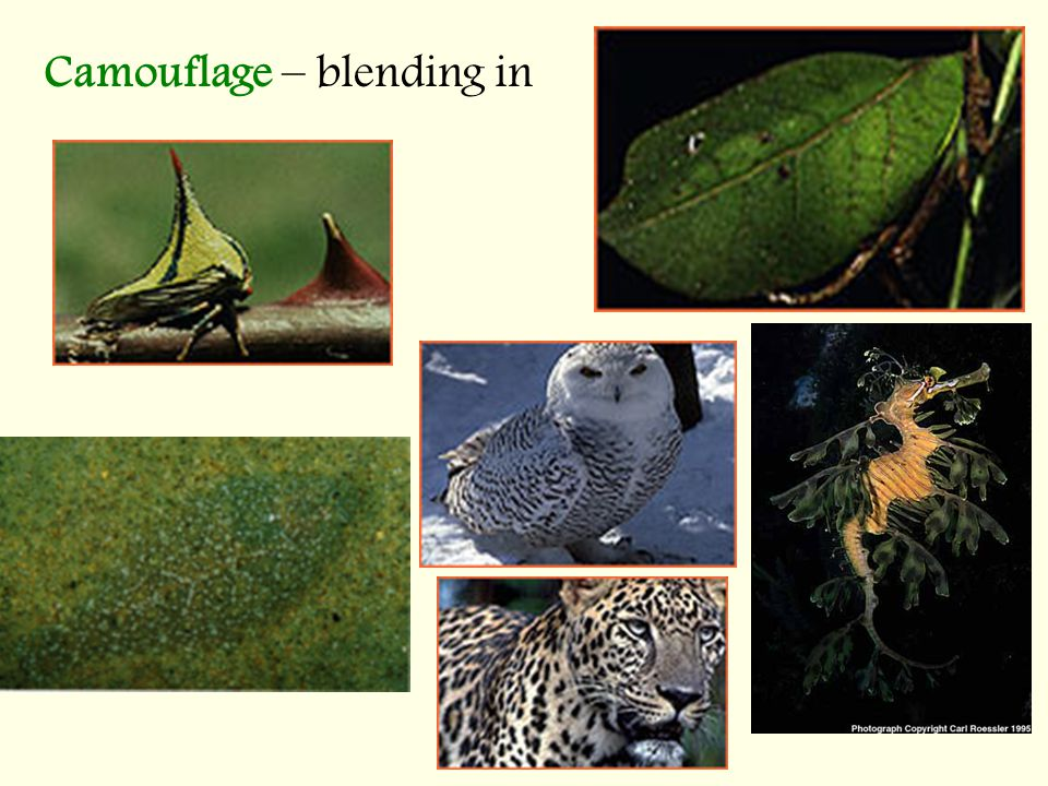 Camouflage – blending in