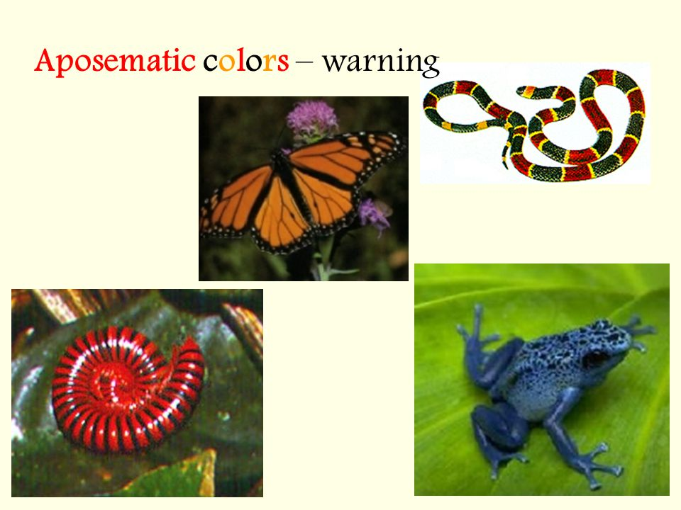 Aposematic colors – warning