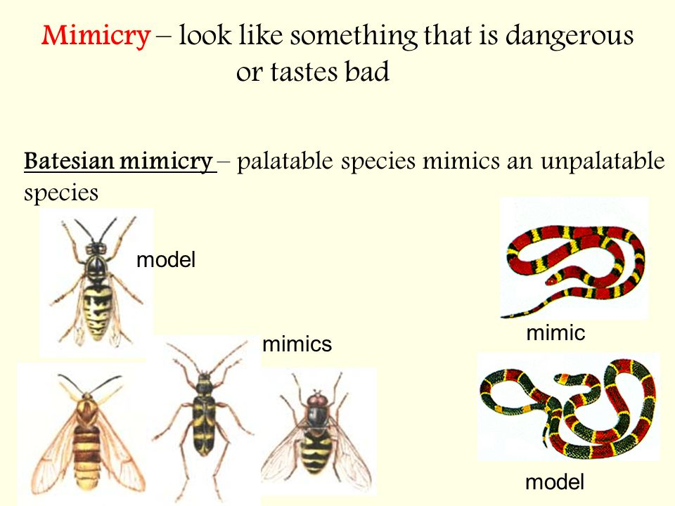 Mimicry – look like something that is dangerous or tastes bad