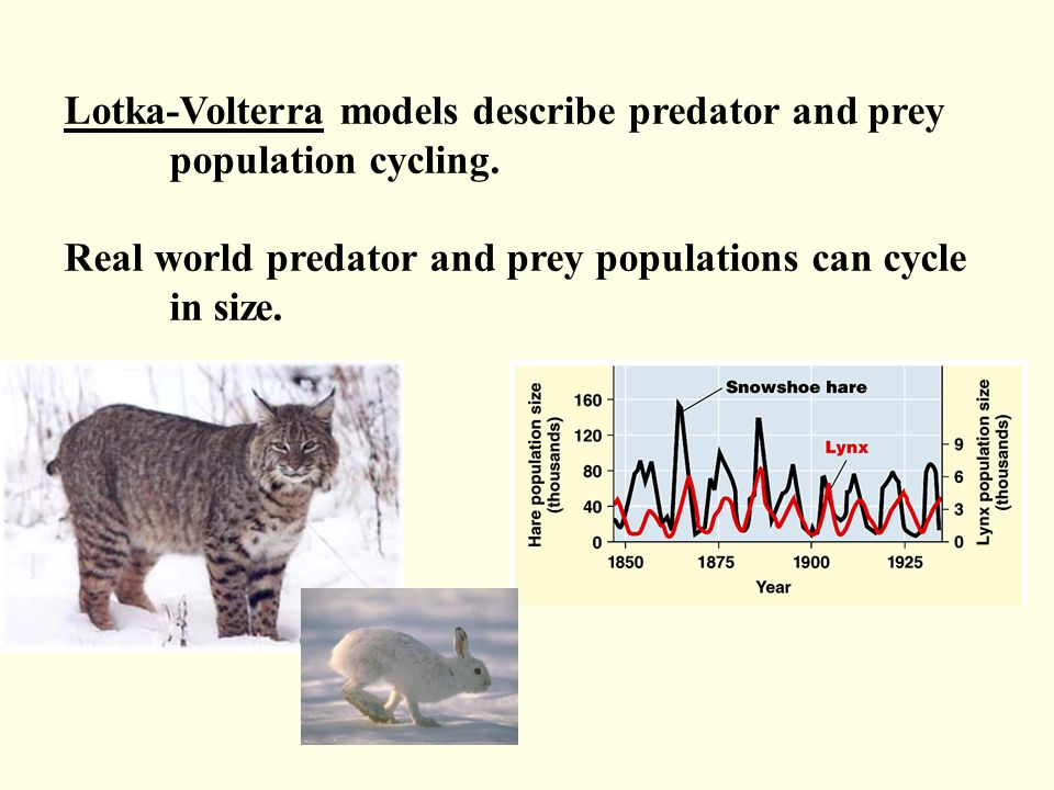 Lotka-Volterra models describe predator and prey