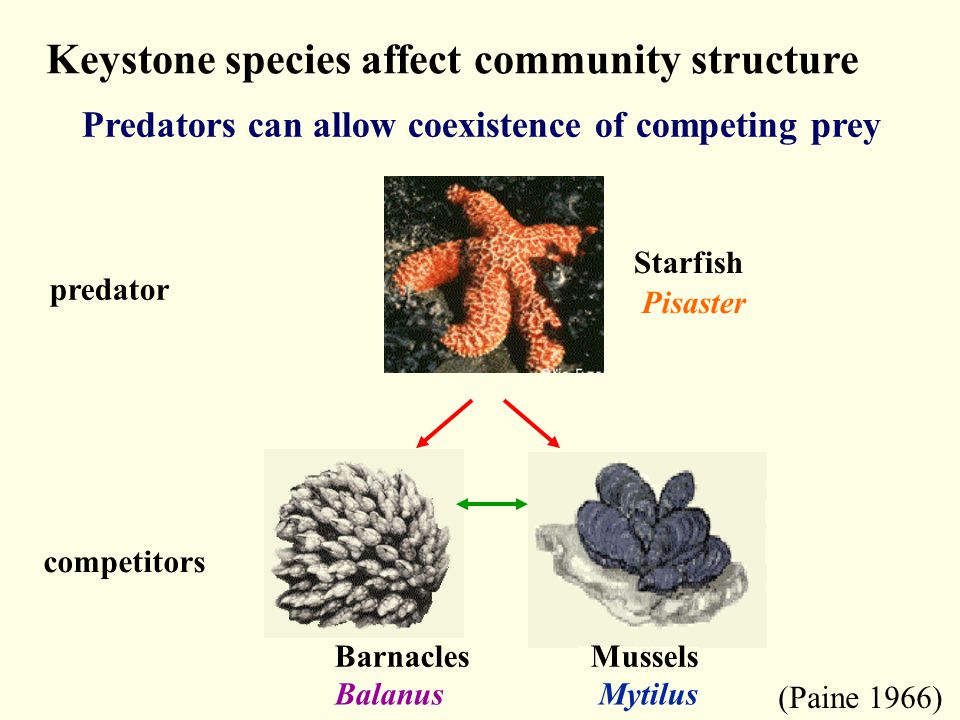 Keystone species affect community structure