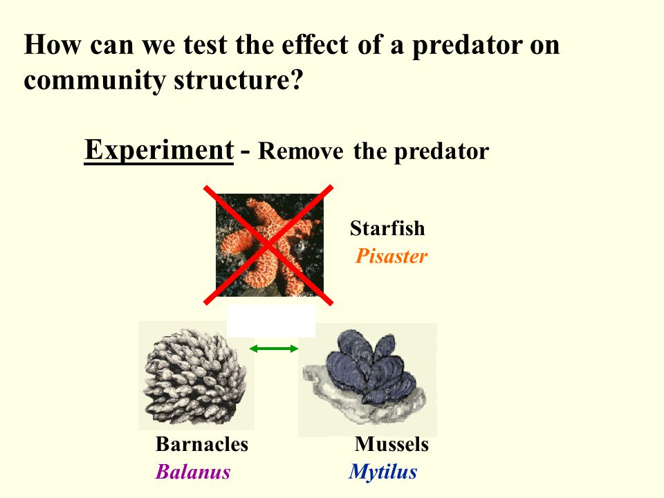 How can we test the effect of a predator on community structure