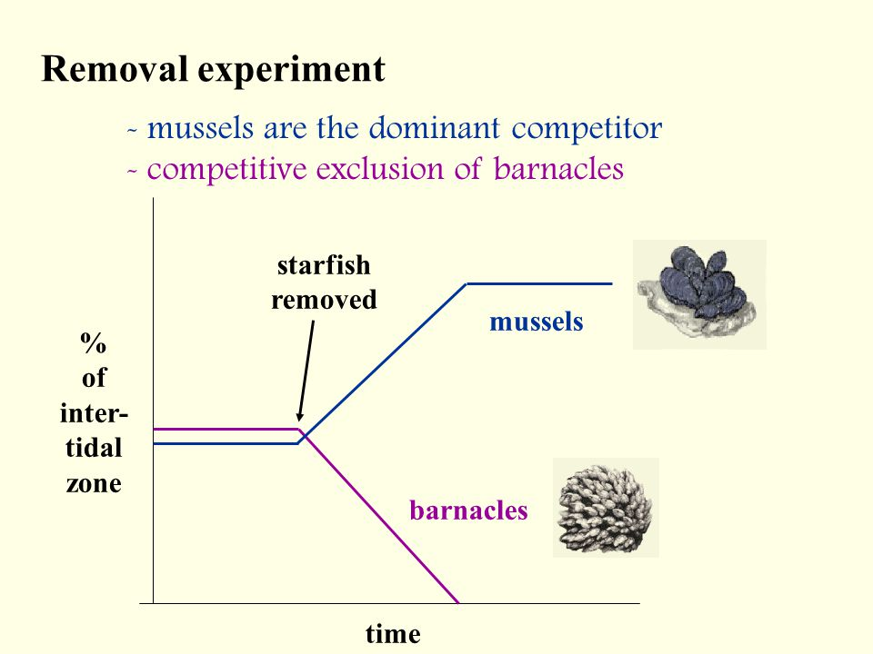 Removal experiment - mussels are the dominant competitor