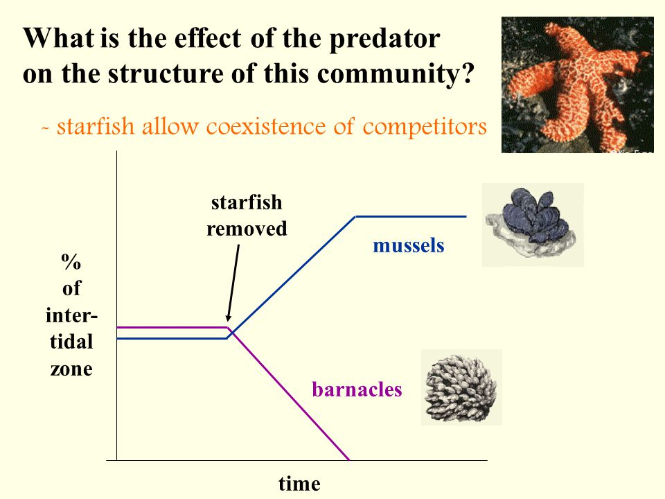 What is the effect of the predator on the structure of this community