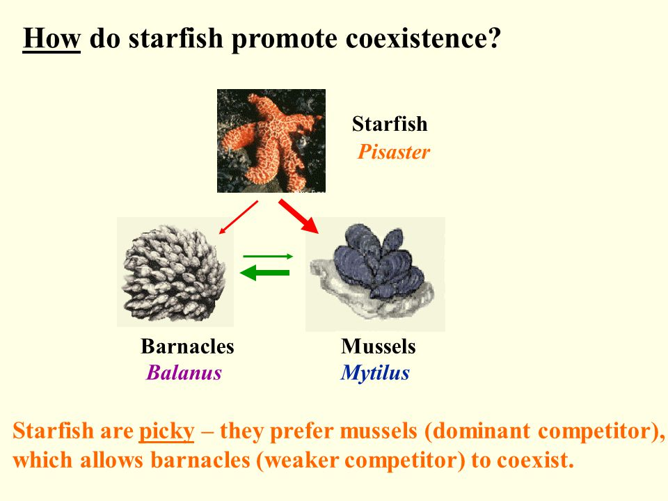 How do starfish promote coexistence