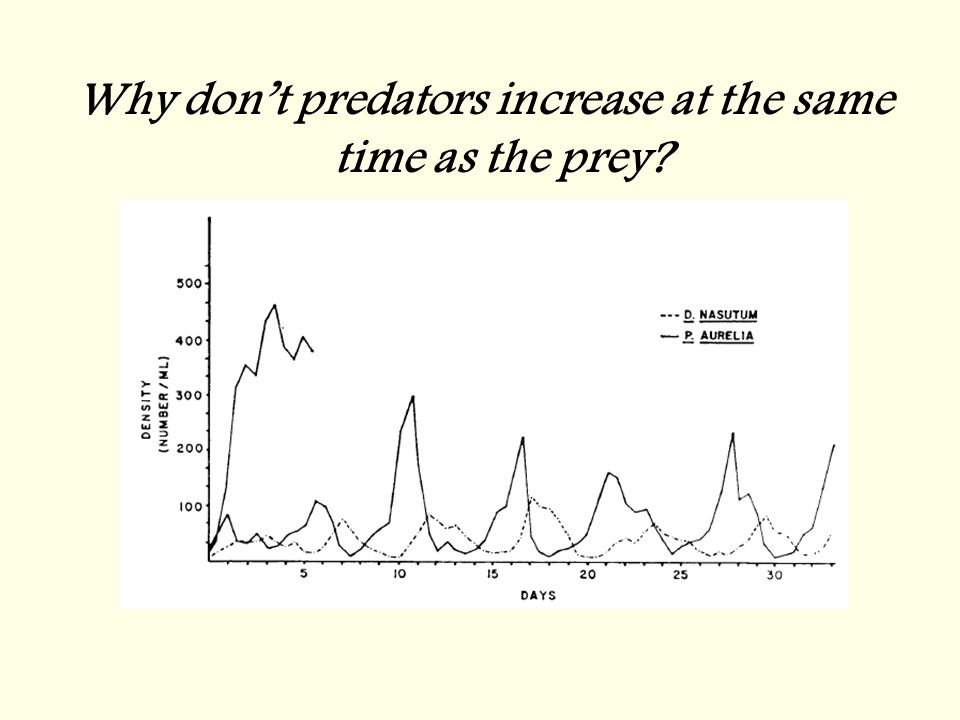 Why don't predators increase at the same time as the prey