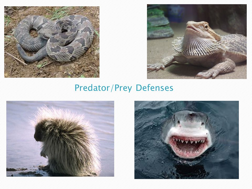 Predator/Prey Defenses