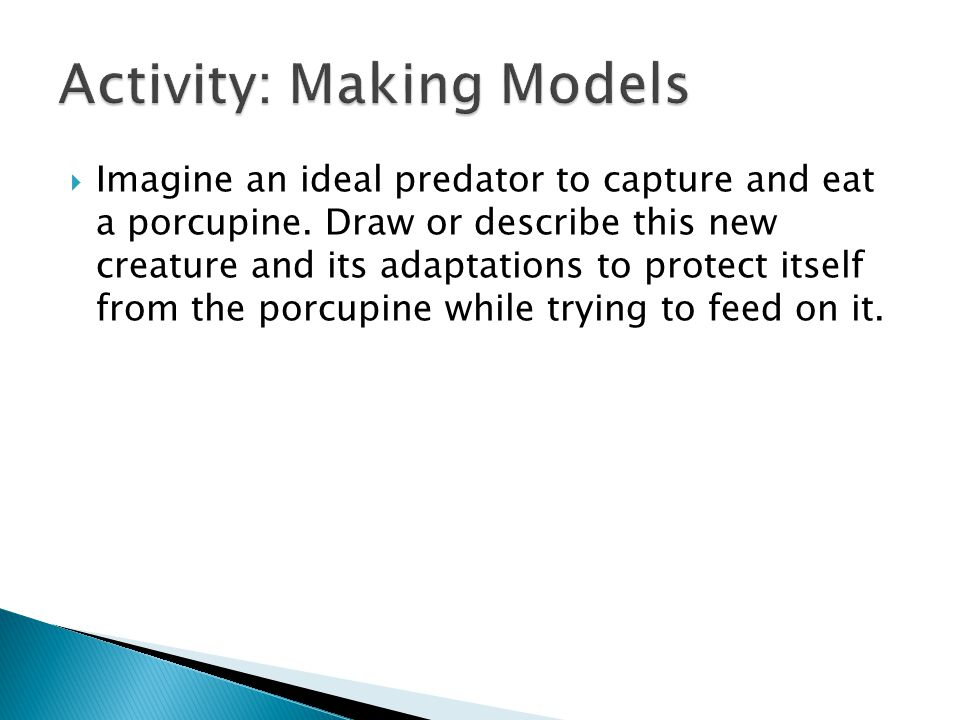 Activity: Making Models