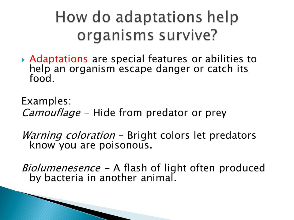 How do adaptations help organisms survive