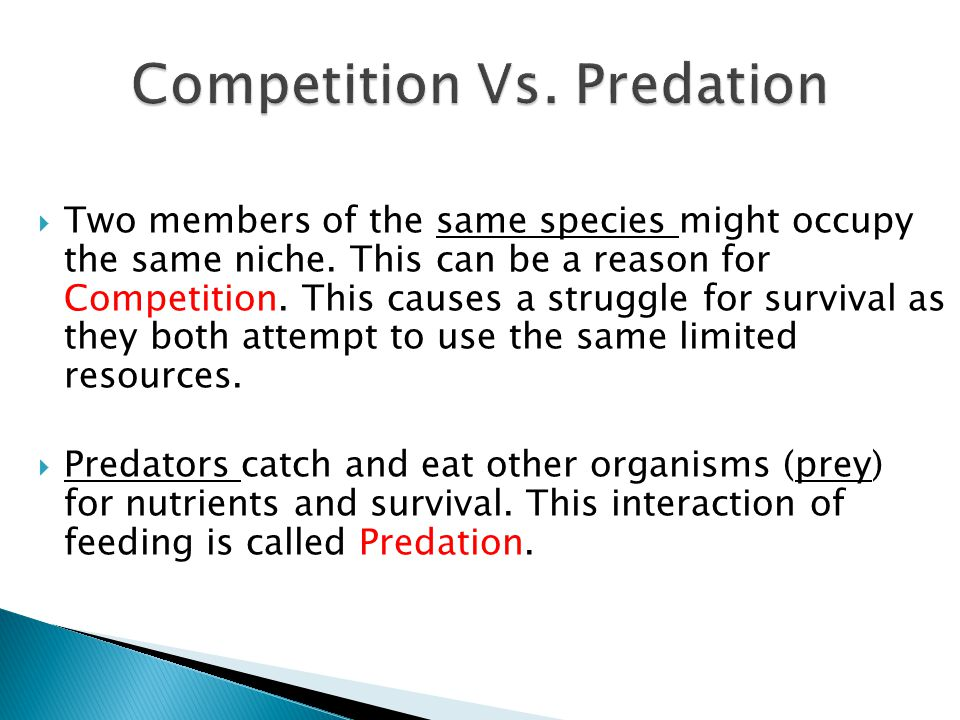 Competition Vs. Predation