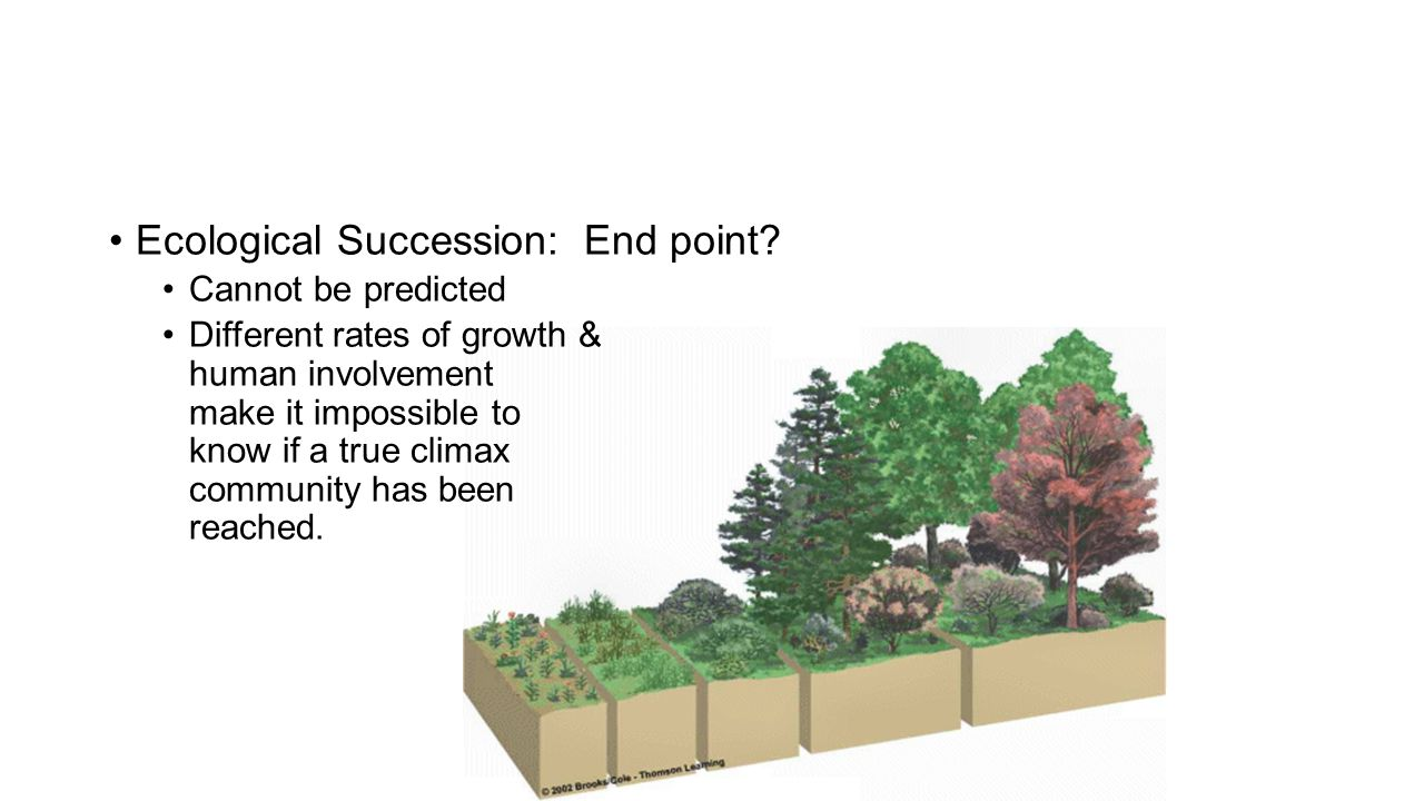 Ecological Succession: End point