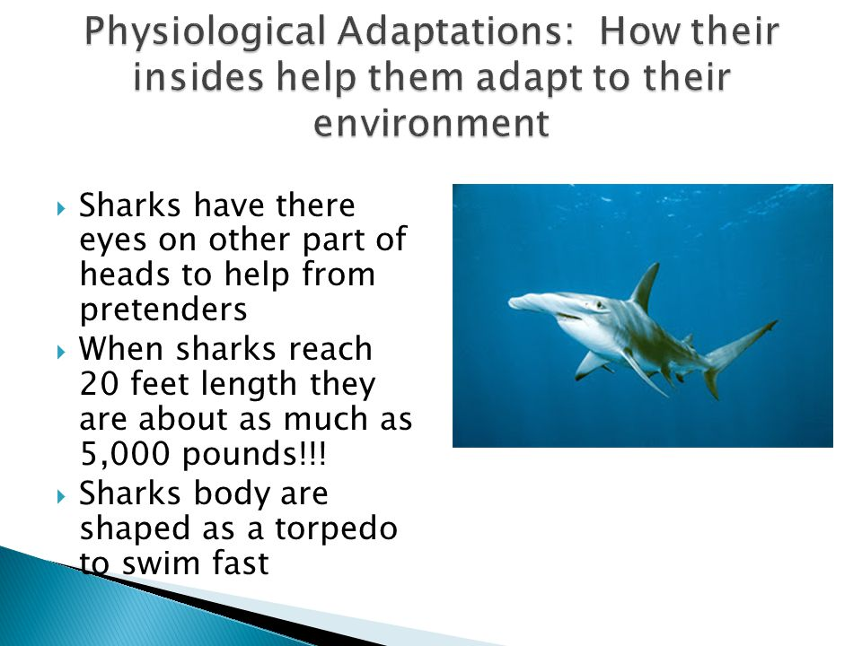Physiological Adaptations: How their insides help them adapt to their environment