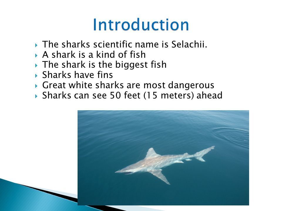 Introduction The sharks scientific name is Selachii.