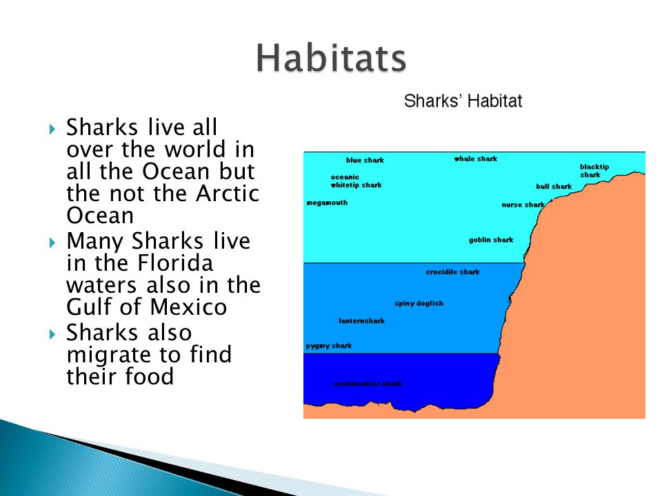 Habitats Sharks live all over the world in all the Ocean but the not the Arctic Ocean.